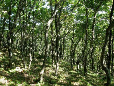 wood, nature, landscape, leaf, tree, environment, flora, sun