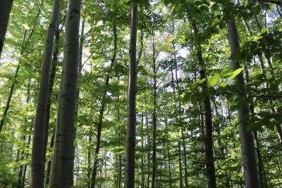 drvo, prirode, list, stablo, krajolik, okoliš, flora
