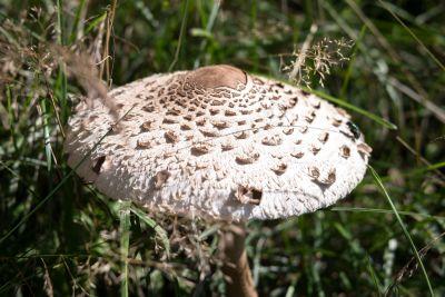 Pilz, Pilz, Natur, Rasen, Wild, Holz, Pflanzen, Wald