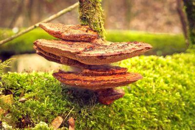 wood, leaf, nature, tree, moss, herb, mushroom, forest