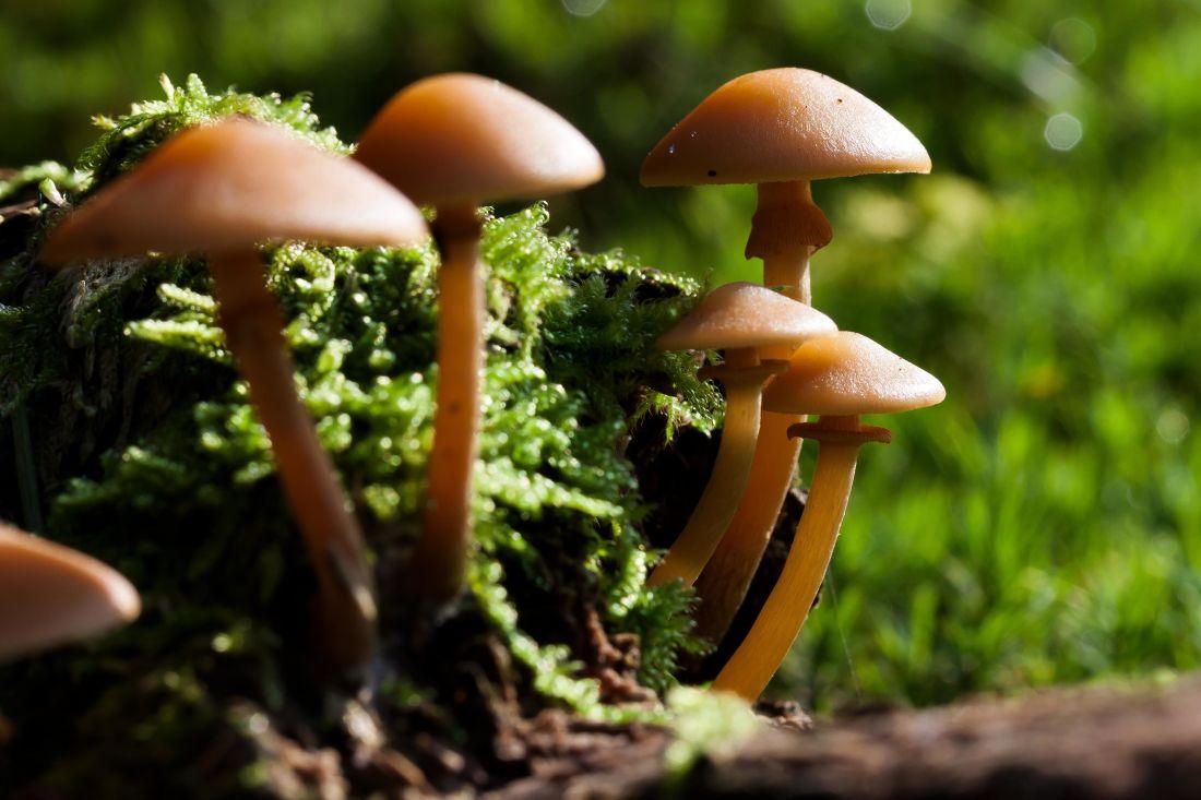 mushroom, fungus, wood, nature, moss, spore, forest