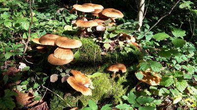 Pilz, Pilz, Holz, Natur, Blatt, Moos, Flora, vergiften