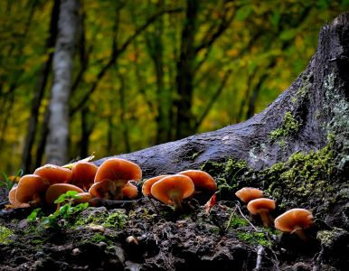 mushroom, fungus, moss, wood, nature, daylight, tree, leaf