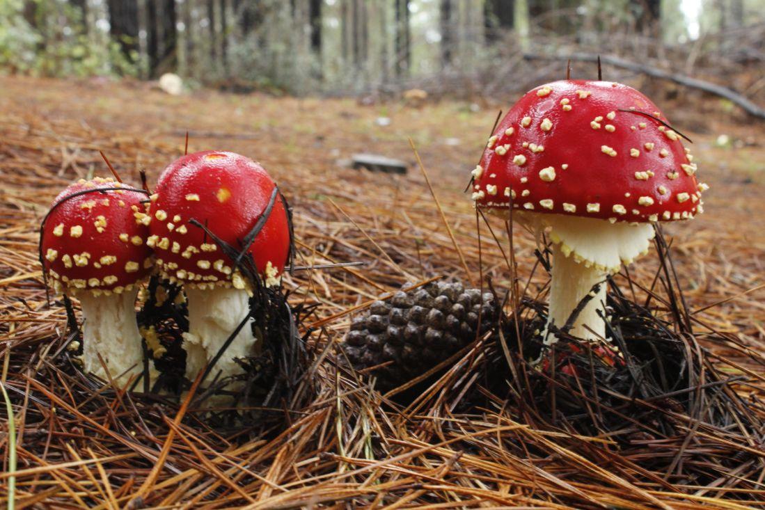mushroom, fungus, nature, wood, poison, organism