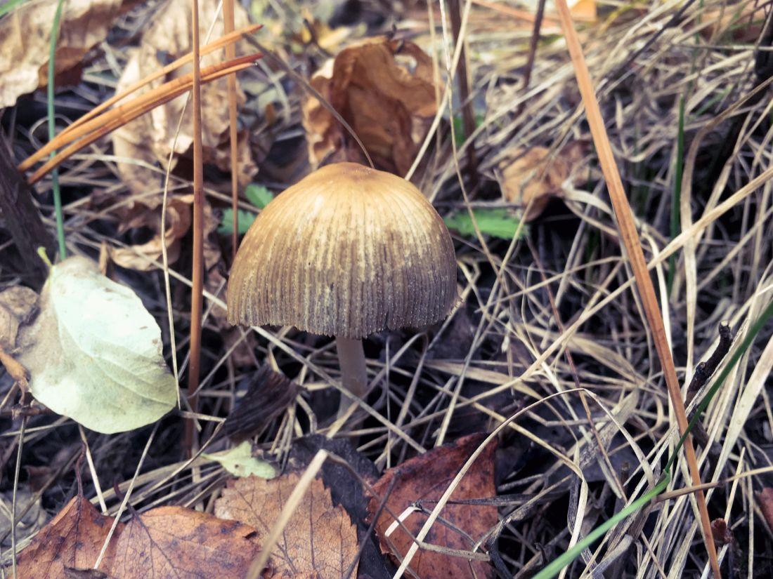 houby, houby, příroda, dřevo, flora, byliny, trávy