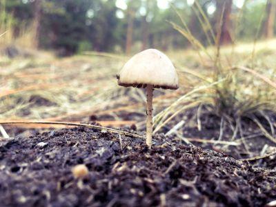 cogumelo, fungo, natureza, madeira, solo, grama, flora, floresta
