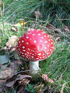 mushroom, fungus, grass, nature, wood, wild, organism