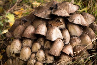 fungus, mushroom, nature, wood, moss, grass, toxic, organic, spore