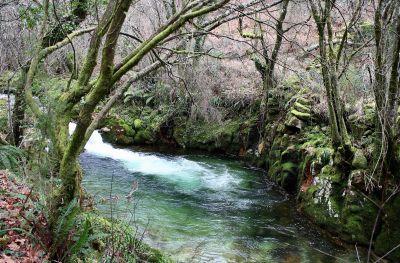 vesi, puu, luonto, river, stream, maisema, puu, lehtiä