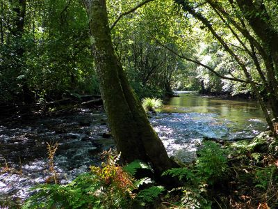 water, wood, landscape, river, nature, tree, leaf, stream