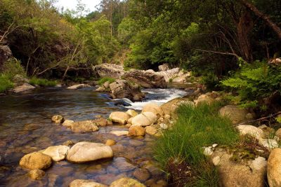water, river, stream, nature, landscape, wood, forest, tree