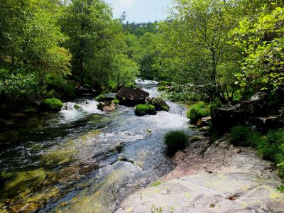 water, nature, wood, river, landscape, stream, waterfall