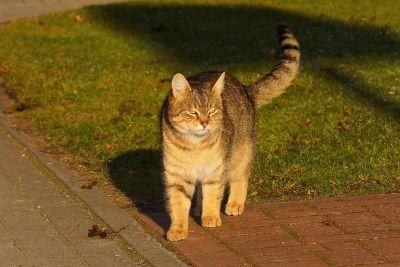 Cat, roztomilý, kočičí, kočička, kožešiny, čiči, pet, licousy, oči