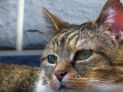 모피, 고양이, 고양이, 고양이, 귀여운, 동물, 애완 동물, 인물, 눈