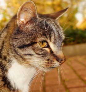 cat, fur, animal, cute, kitten, pet, whisker, pavement, nature, eye