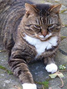 animal, cute, cat, fur, pet, kitten, feline, kitty, asphalt, whiskers