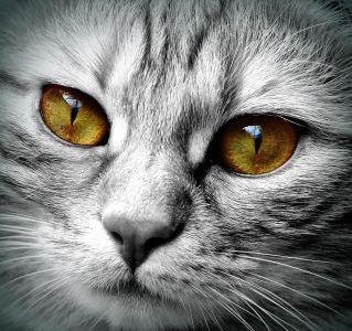 cat, portrait, eye, animal, detail, pet, fur, kitten, cute, whisker