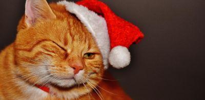 gatto, carino, cappello, ritratto, animale, pelliccia, animale, felino, gattino, gattino
