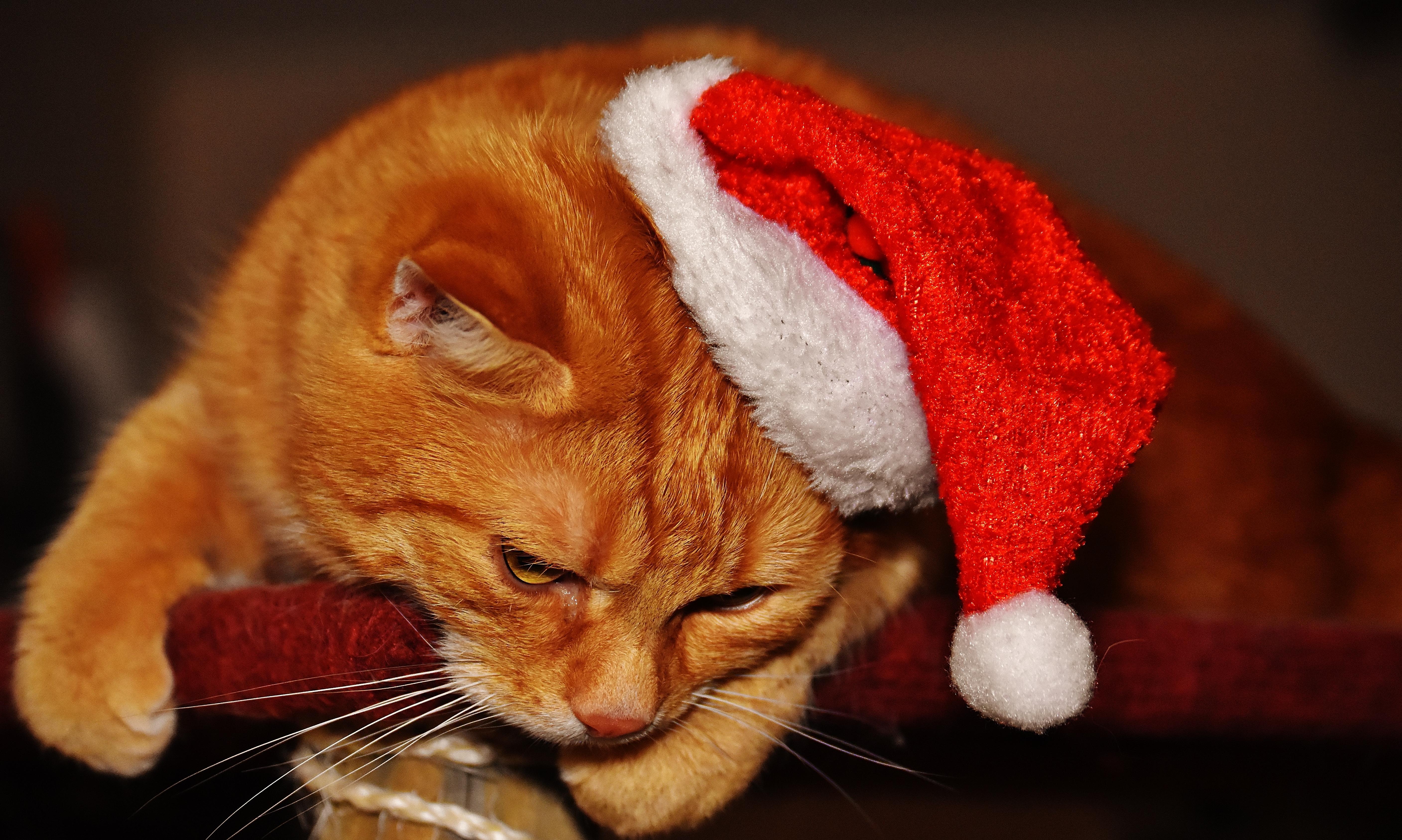 Image libre chat chapeau int rieur yeux griffes for Interieur yeux