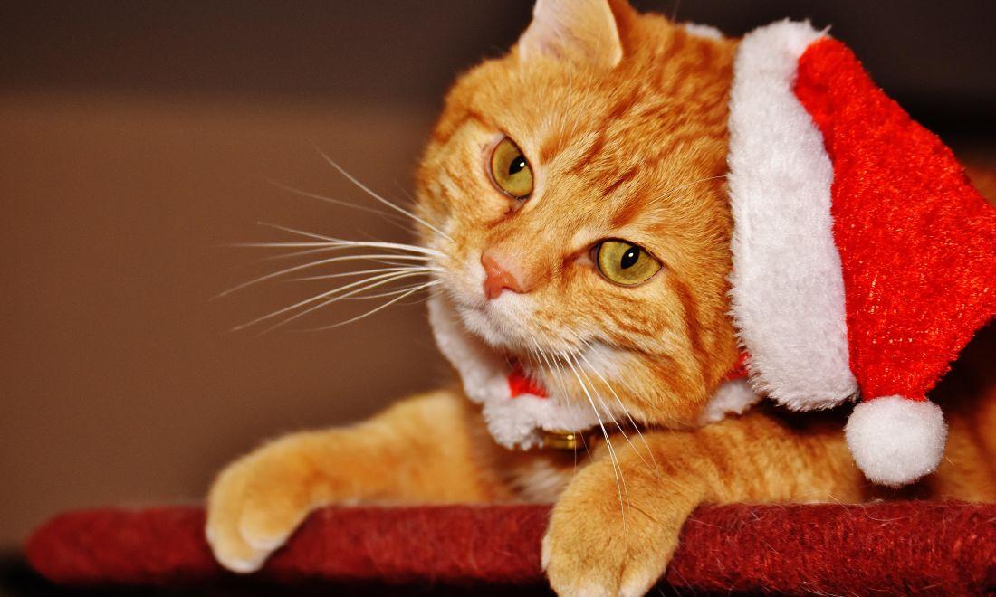 cute, cat, fur, portrait, interior, funny