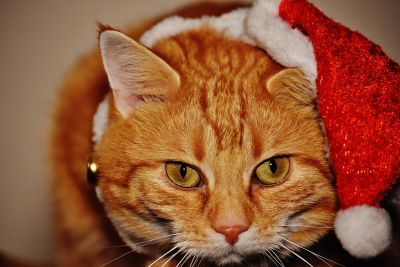 cat, portrait, cute, decoration, face, animal, eye, macro