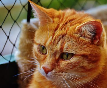 cat, animal, cute, eye, pet, portrait, fence, face, kitten, fur, feline