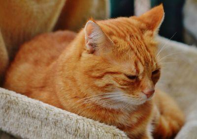 cat, cute, pet, kitten, animal, portrait, fur, eye, feline