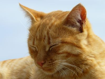 kat, dier, schattig, huisdier, vacht, ogen, kitten, gele, blauwe hemel, katachtige, kitty