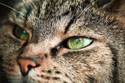 portrait, cat, portrait, nose, adorable, whisker, head, animals, curious, eye