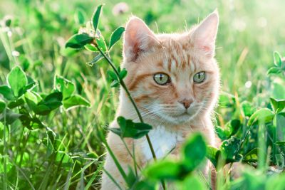 nature, green grass, yellow cat, landscape, animal