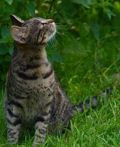 cat, animal, kitten, fur, cute, nature, pet, portrait, grass