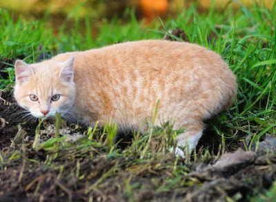 cute, cat, grass, animal, nature, kitten, fur, young, pet