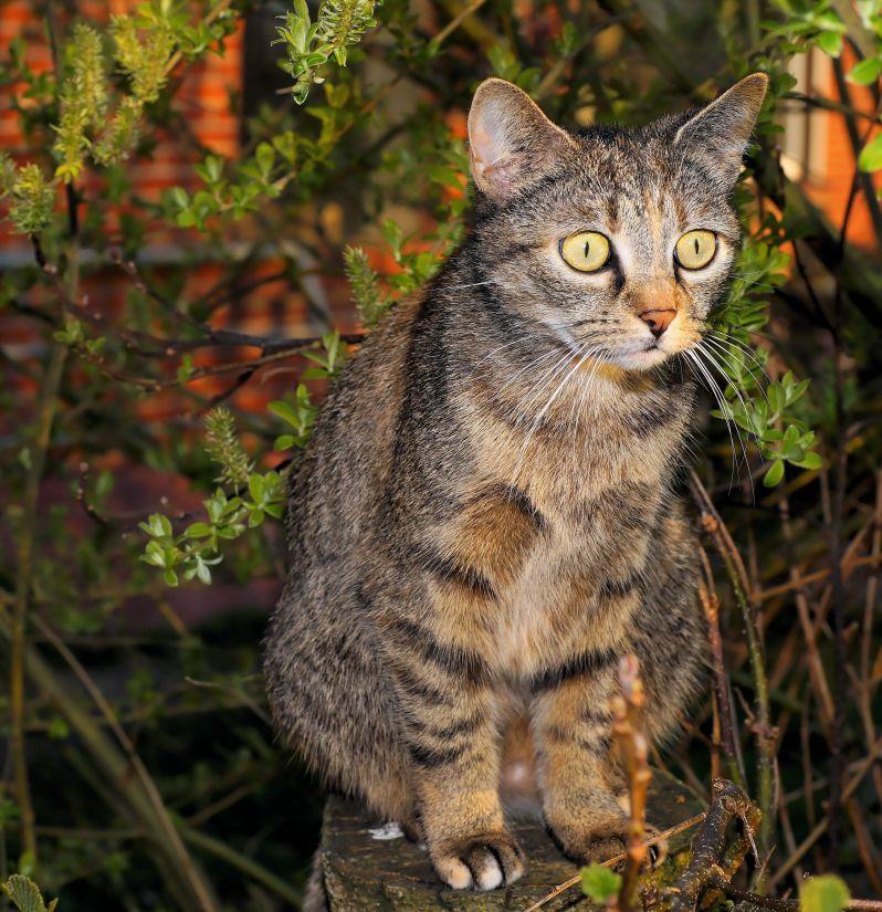 cat, fur, animal, cute, nature, kitten, portrait, eye, pet
