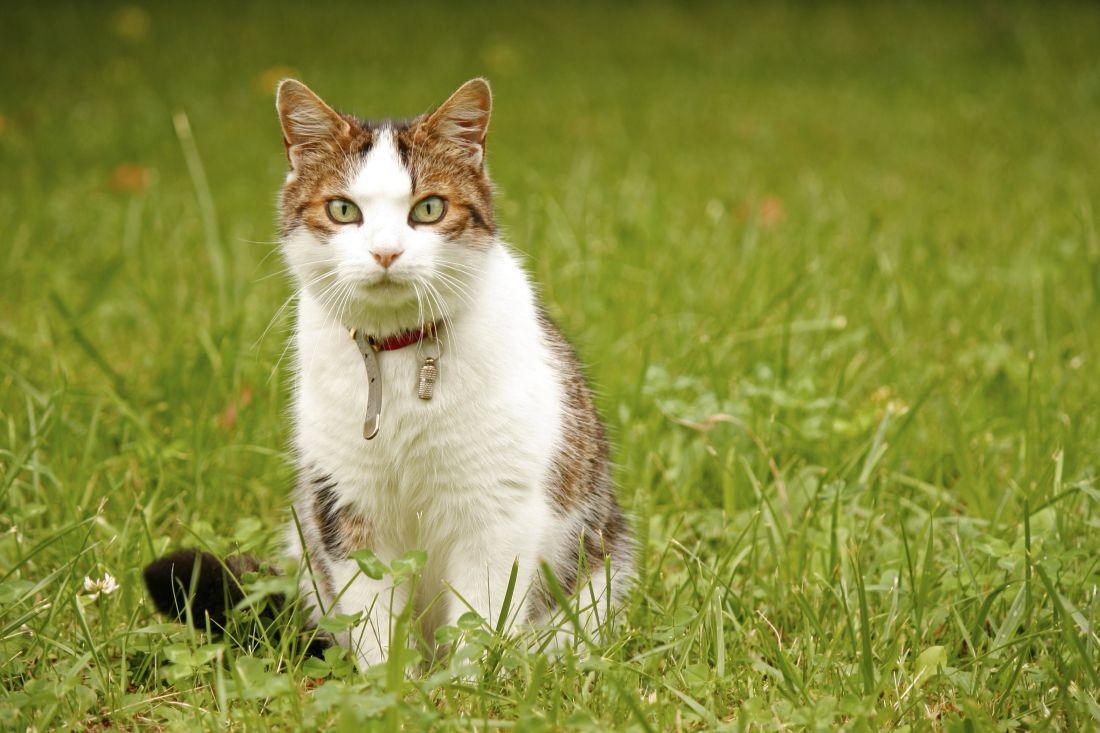 grass, cute, animal, nature, cat, kitty, feline, pet, kitten
