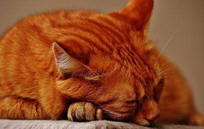 chat, chaton mignon, pet, portrait, animaux, fourrure