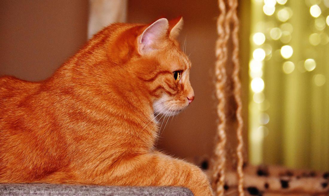kostenlose bild katze niedlich portrait tier haustier k tzchen katze junge kitty. Black Bedroom Furniture Sets. Home Design Ideas