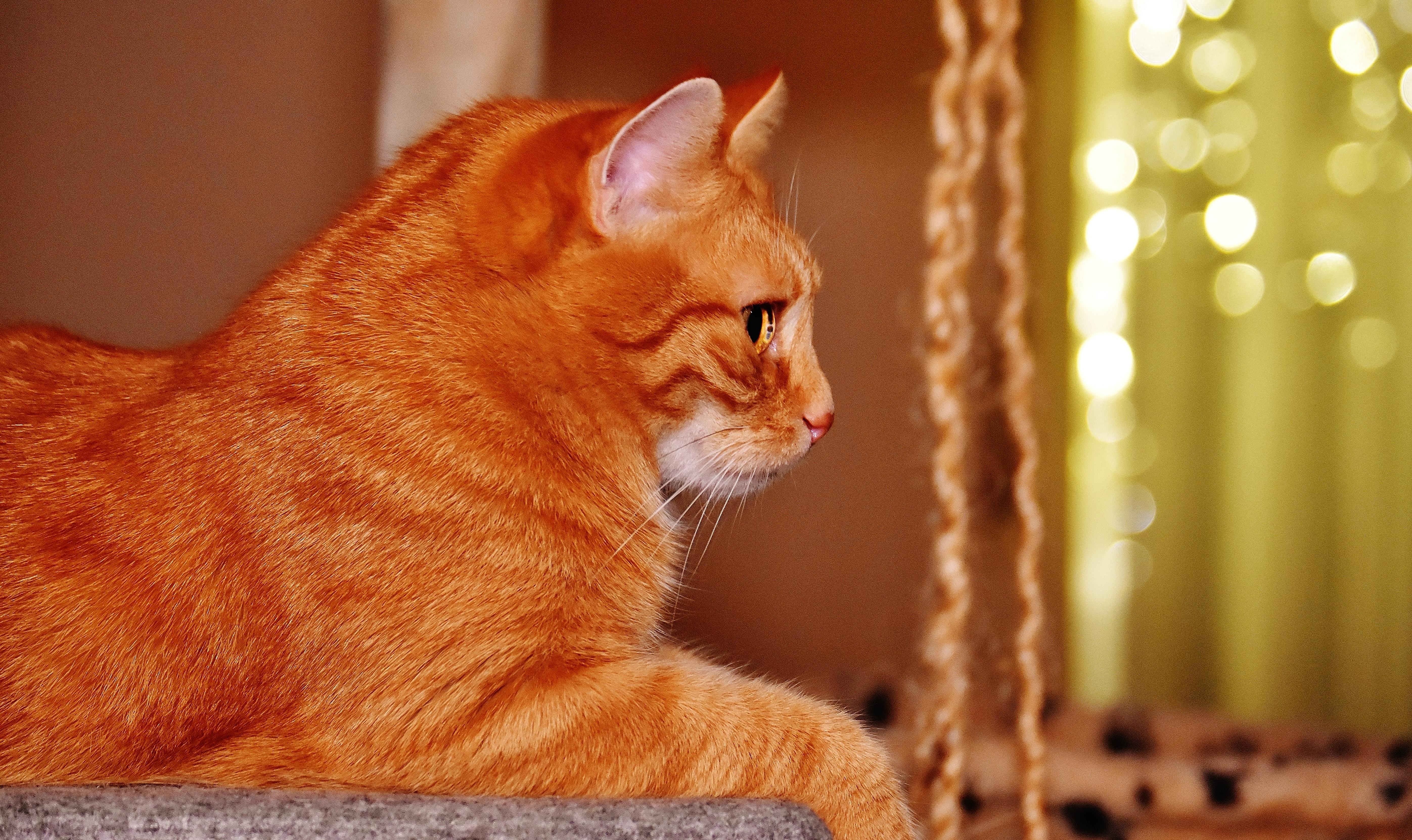 Najlepšie mačička obrázky