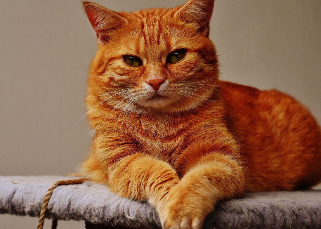 kostenlose bild portr t niedliche tier katze k tzchen kitty katze fell haustier. Black Bedroom Furniture Sets. Home Design Ideas