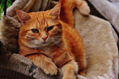 cute, animal, cat, fur, kitten, feline, kitty, pet, whiskers