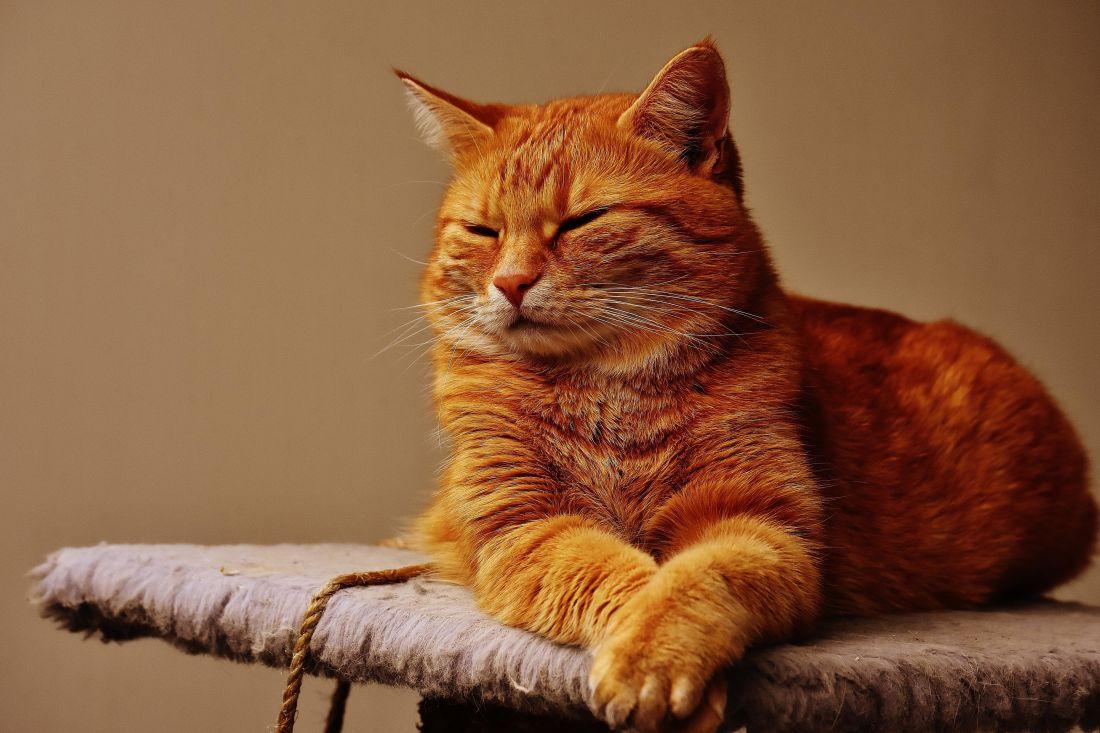 Cat, portrét, roztomilý, kočičí, domácí zvířata, kotě, kočička, kožešiny, vousy