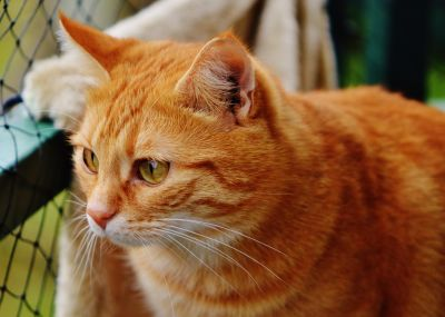 kucing, potret, hewan, hewan peliharaan, lucu, mata, bulu, kucing, kucing