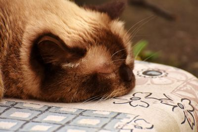 sonno, gattino, gatto domestico, textil, carina