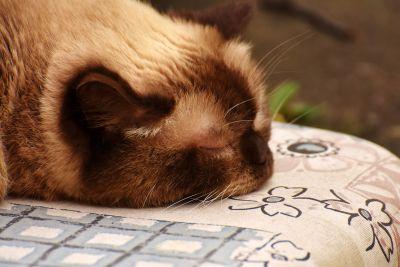 sleep, domestic cat, kitty, textil, cute