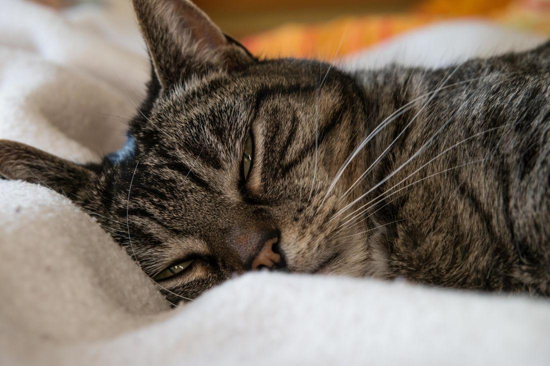 cat, animal, portrait, cute, pet, kitten, sleep, eye, fur, feline
