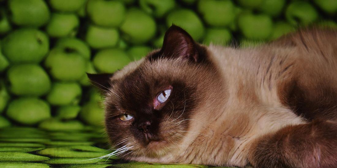 Katze, niedlich, Porträt, Haustier, Tier, Auge, Schlaf, Katze, Fell, Kätzchen