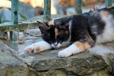 γάτα, γλυκουλα, ζώο, κατοικίδιο ζώο, γούνα, πορτραίτο, γατάκι, φράχτη, πέτρα, γατούλα