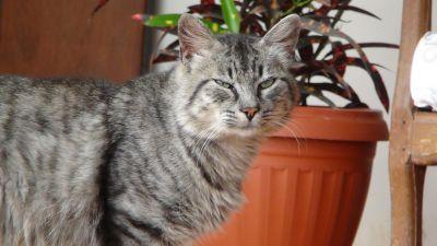 kedi, şirin, kürk, Evcil Hayvan, hayvan, iç, mobilya, kedi, yavru kedi, pisi