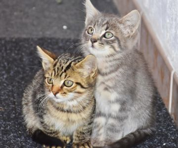 кошка, милый, котенок, животных, игривым, животных, мех, портрет, молодой
