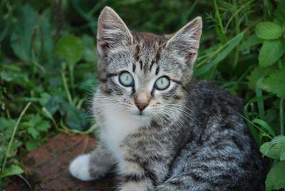 carina, animale, natura, gatto, animali, pelliccia, giovani, occhio, testa, ritratto, gattino