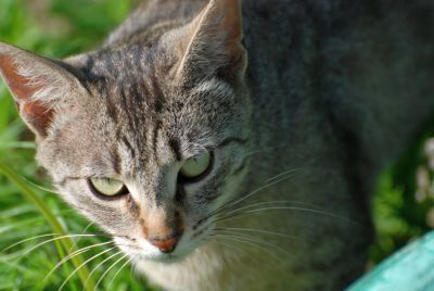 mignon, nature, animal, fourrure, chat, oeil, animal de compagnie, portrait, jeune